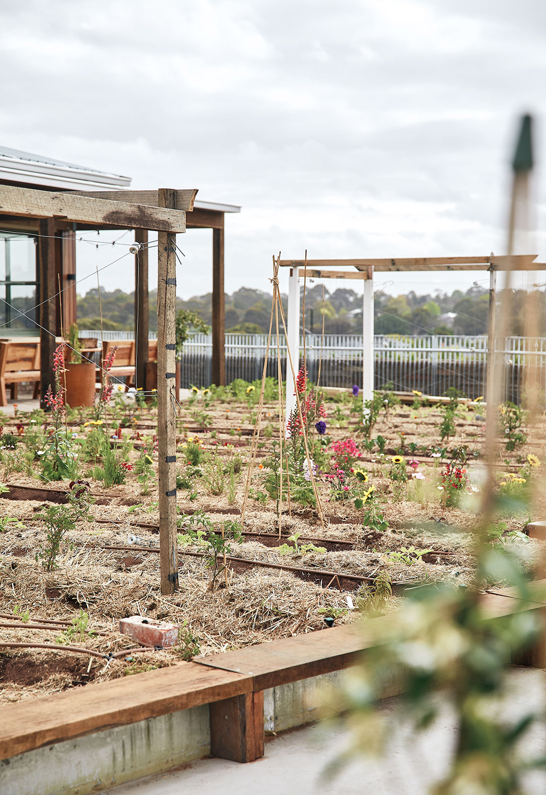 The roof area of Burwood Brickworks is utilised as an urban farm and eatery that helps to connect people to the environment and their food.